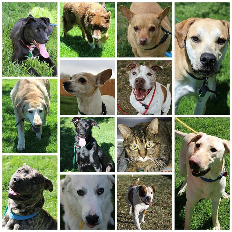 Here are some of the animals adopted or transferred to