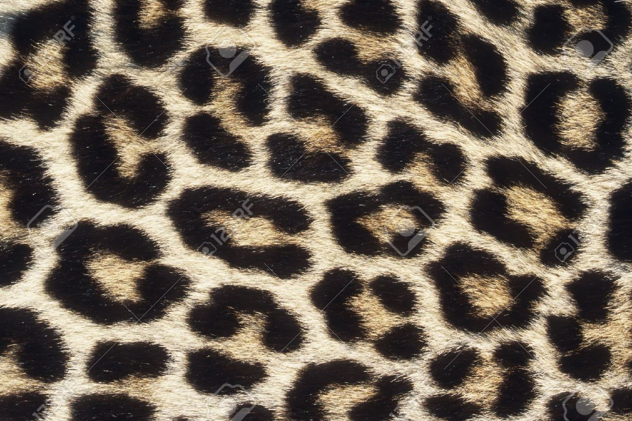 Stock Leopard Pattern Animal Print Rug Cool