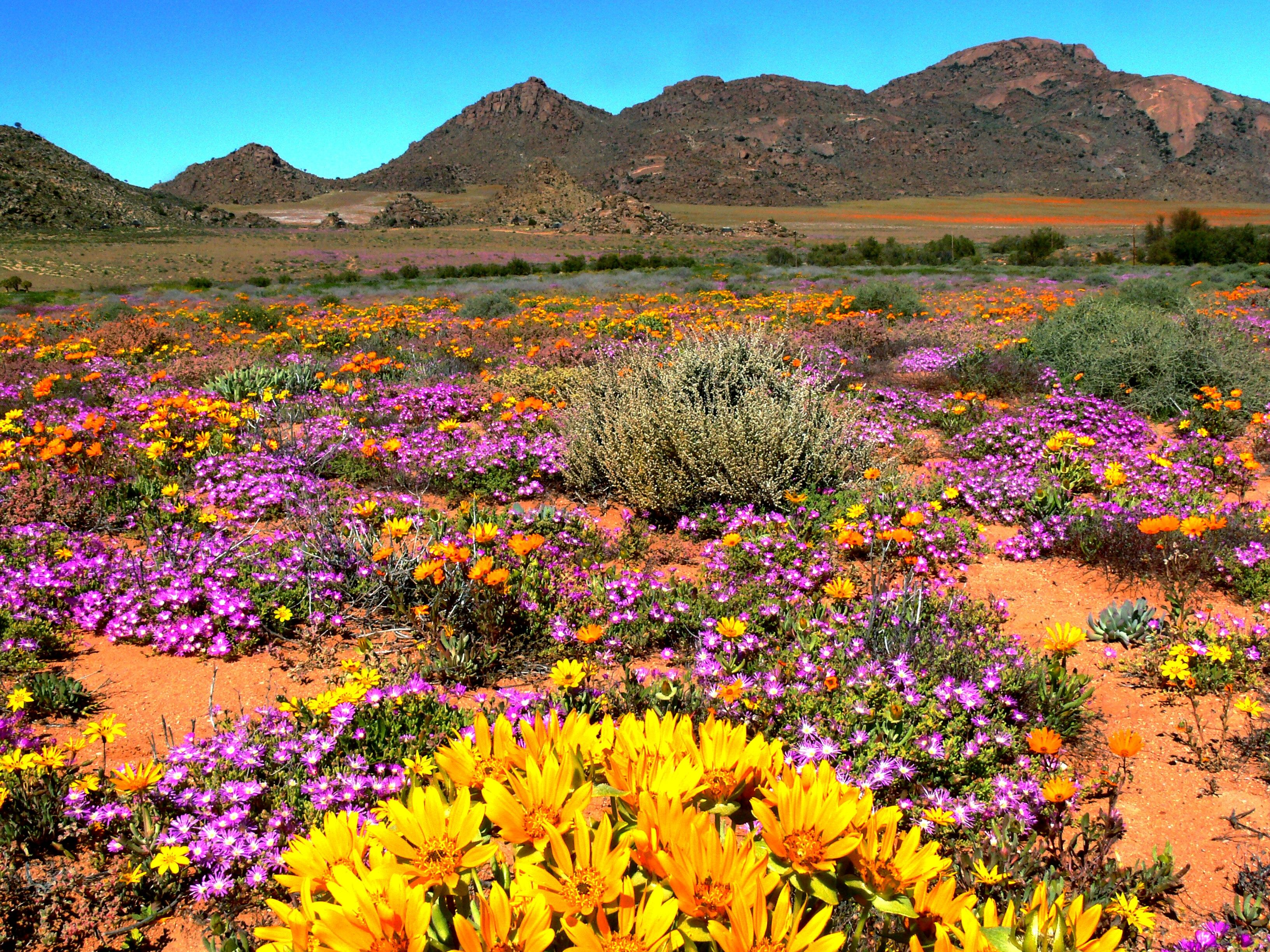 Namaqualand, Northern Cape | South africa travel, Africa travel, Scenery