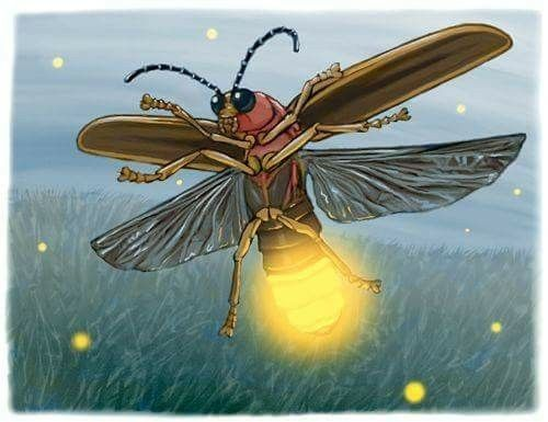 Firefly/Lightening Bug | Firefly drawing, Fly drawing ...