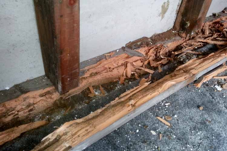 Signs And Treatment Of Termite Damage Termite Damage