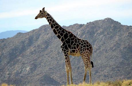 78d0264c3768d9df4863d9ef1ea01188 - The Living Desert Zoo And Gardens Palm Desert California