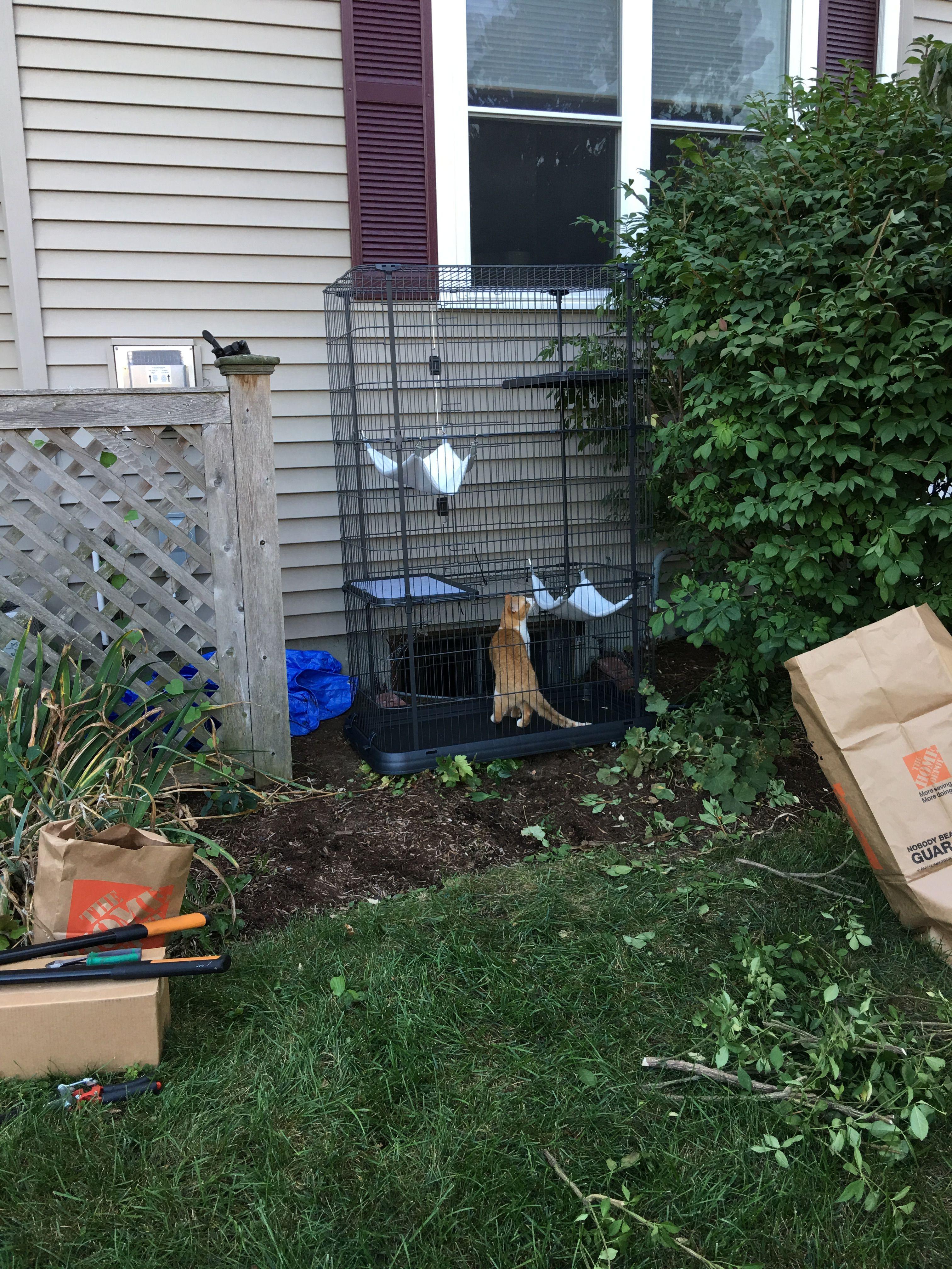 DIY catio using an amazonbought cat enclosure + petsafe
