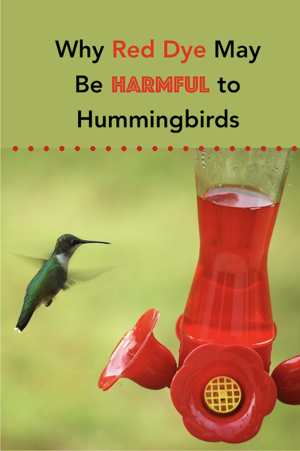 Why Red Dye May Be Harmful To Hummingbirds Hummingbird Hummingbird Food Red Hummingbird