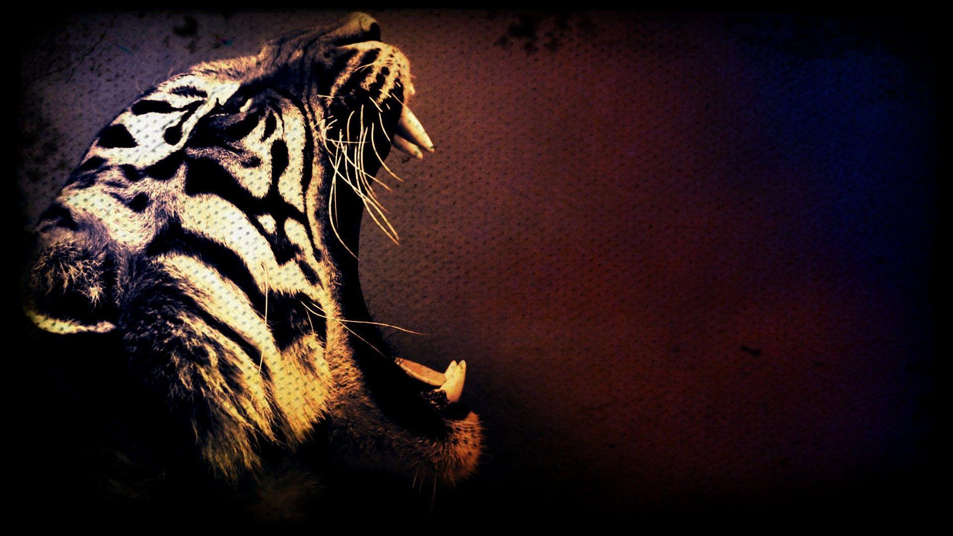 Tiger Canines Wallpaper Tiger Art Tiger Art Wallpaper Tiger Wallpaper