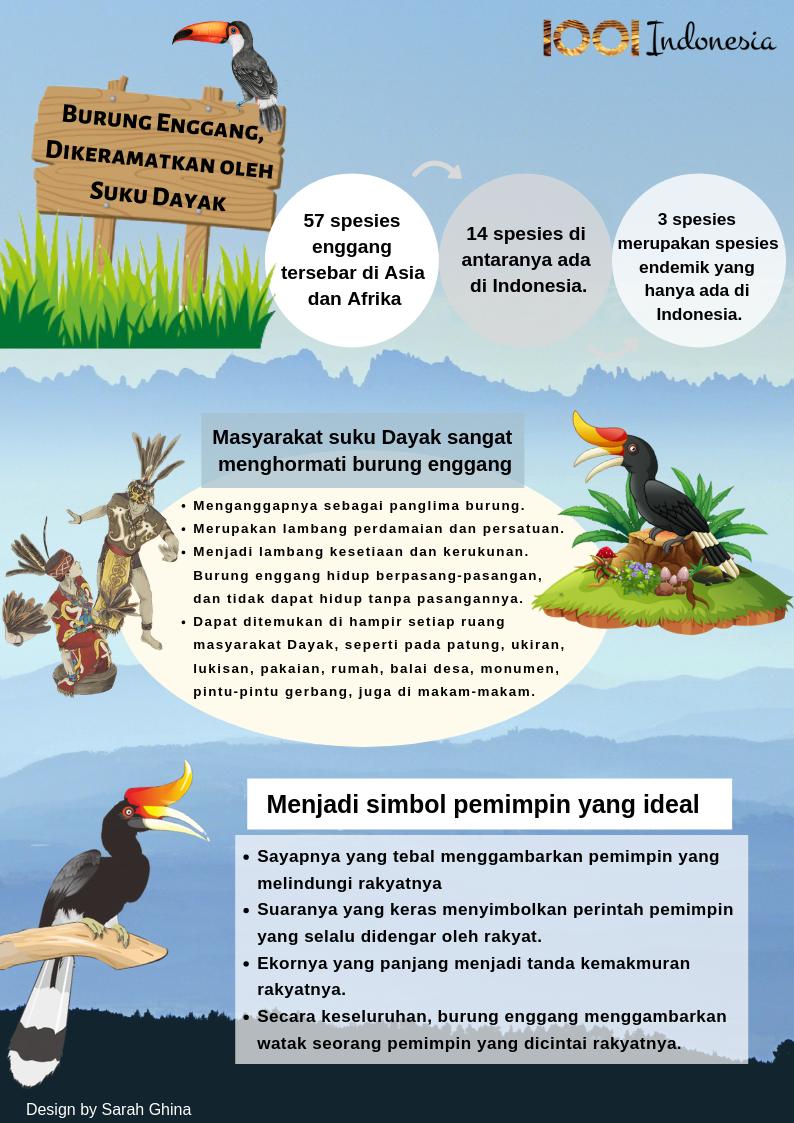 Burung Enggang Burung Afrika Indonesia