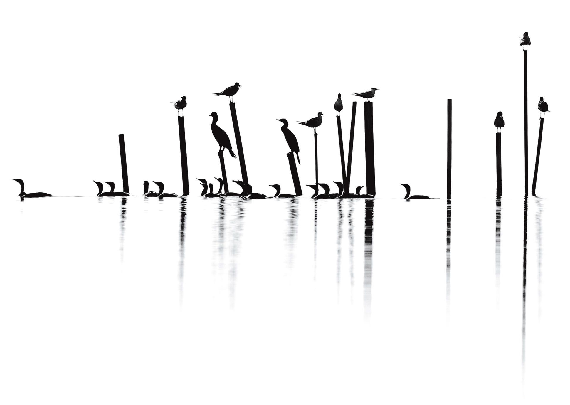 https://www.audubon.org/magazine/may-june-2015/announcing-2015-audubon-photography-awards?utm_source=engagement