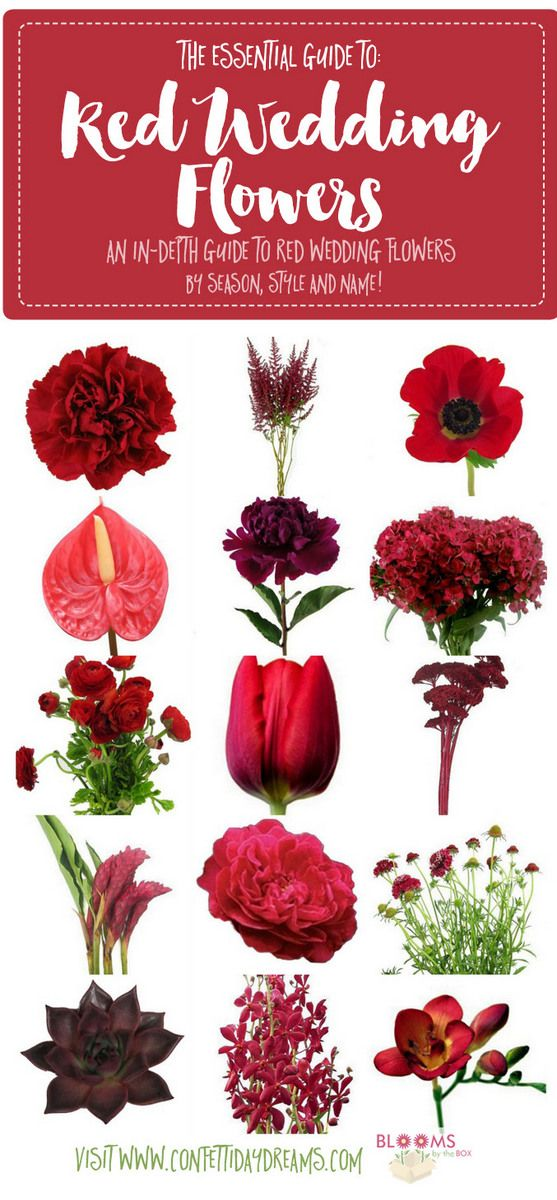 Names and Types of Red Wedding Flowers with Seasons + Pics