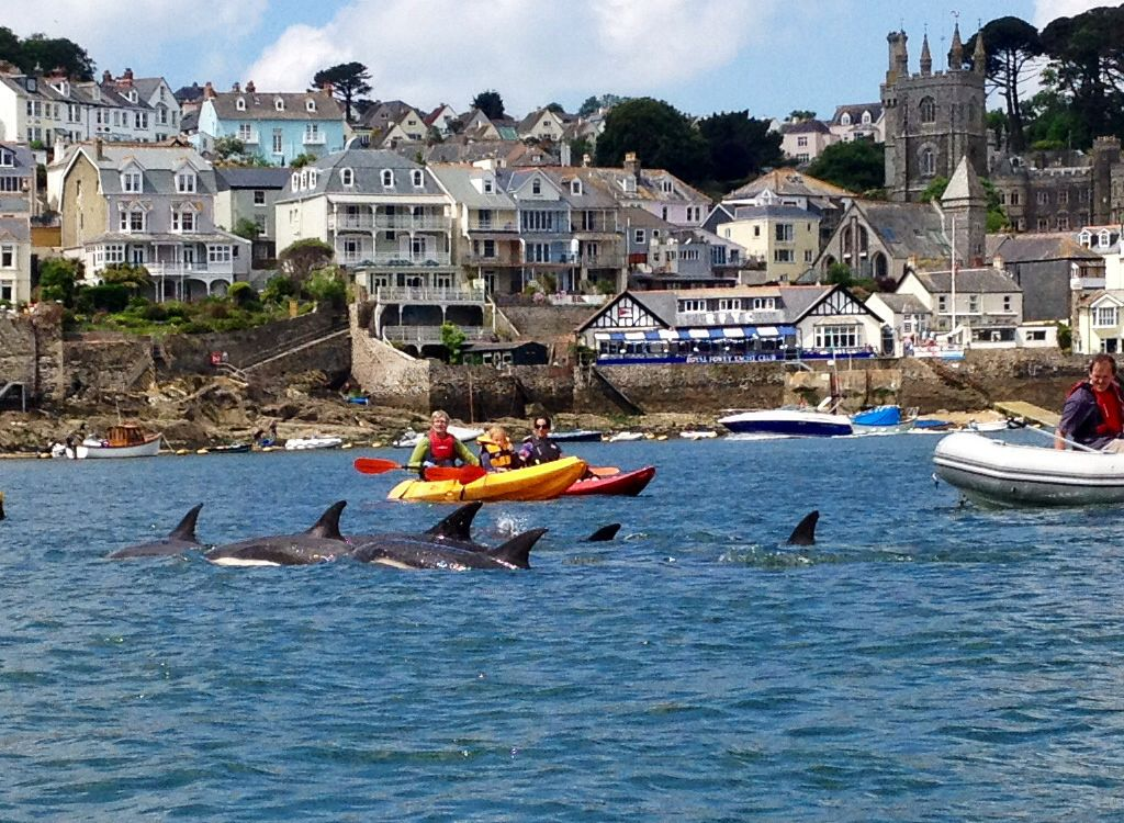 Dolphins in fowey harbour