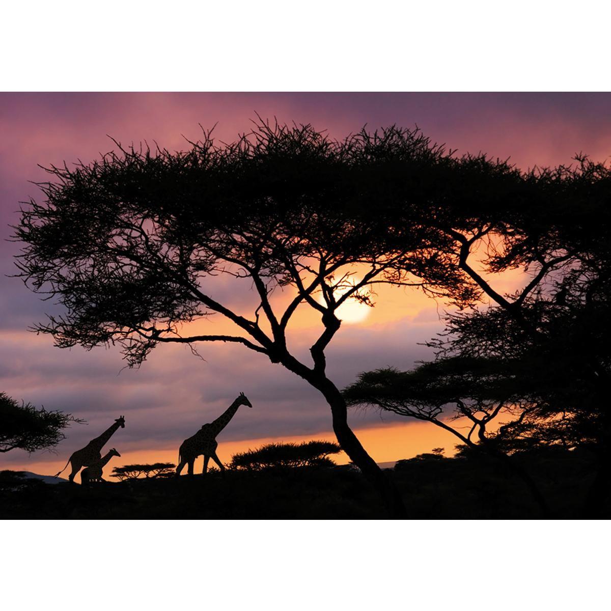 44,99 € Kuvatapetti, African Safari