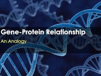 Dna gene protein relationship an analogy students and school dna gene protein relationship an analogy malvernweather Gallery