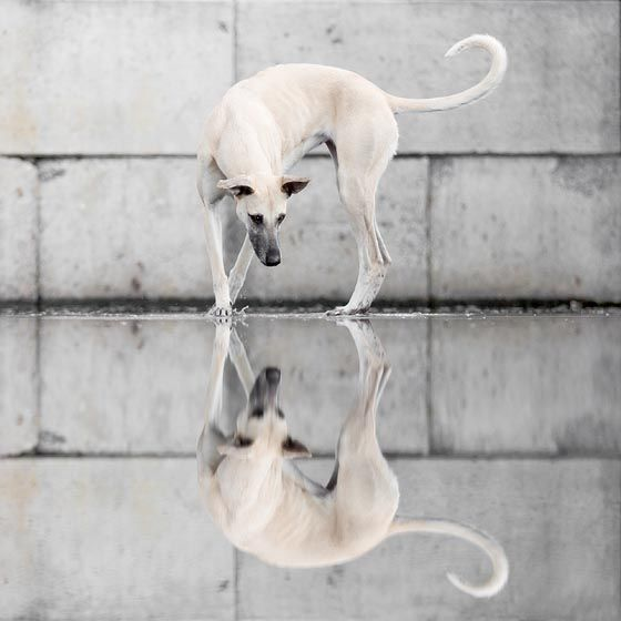 20 Truly Beautiful Water Reflection Photography