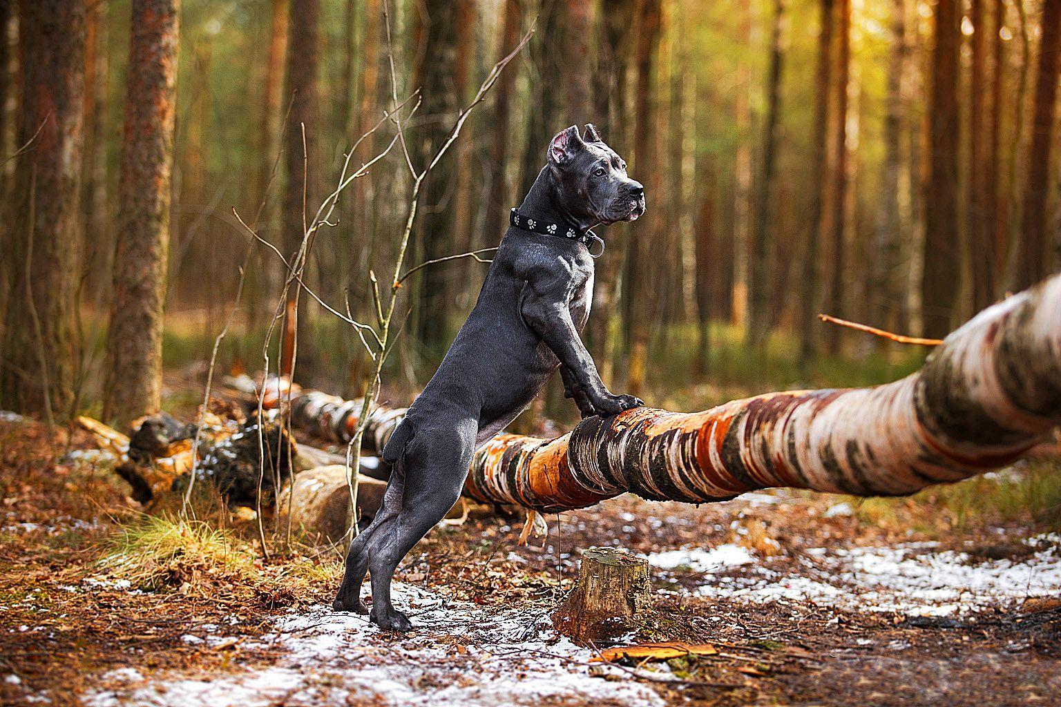 Верность собаки к человеку картинки лучшие