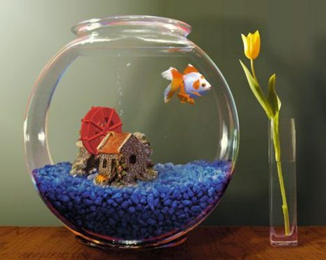 Fish Bowl Decorations Ideas If You Want To Keep The Fish In The Aquarium But Do Not Have Much