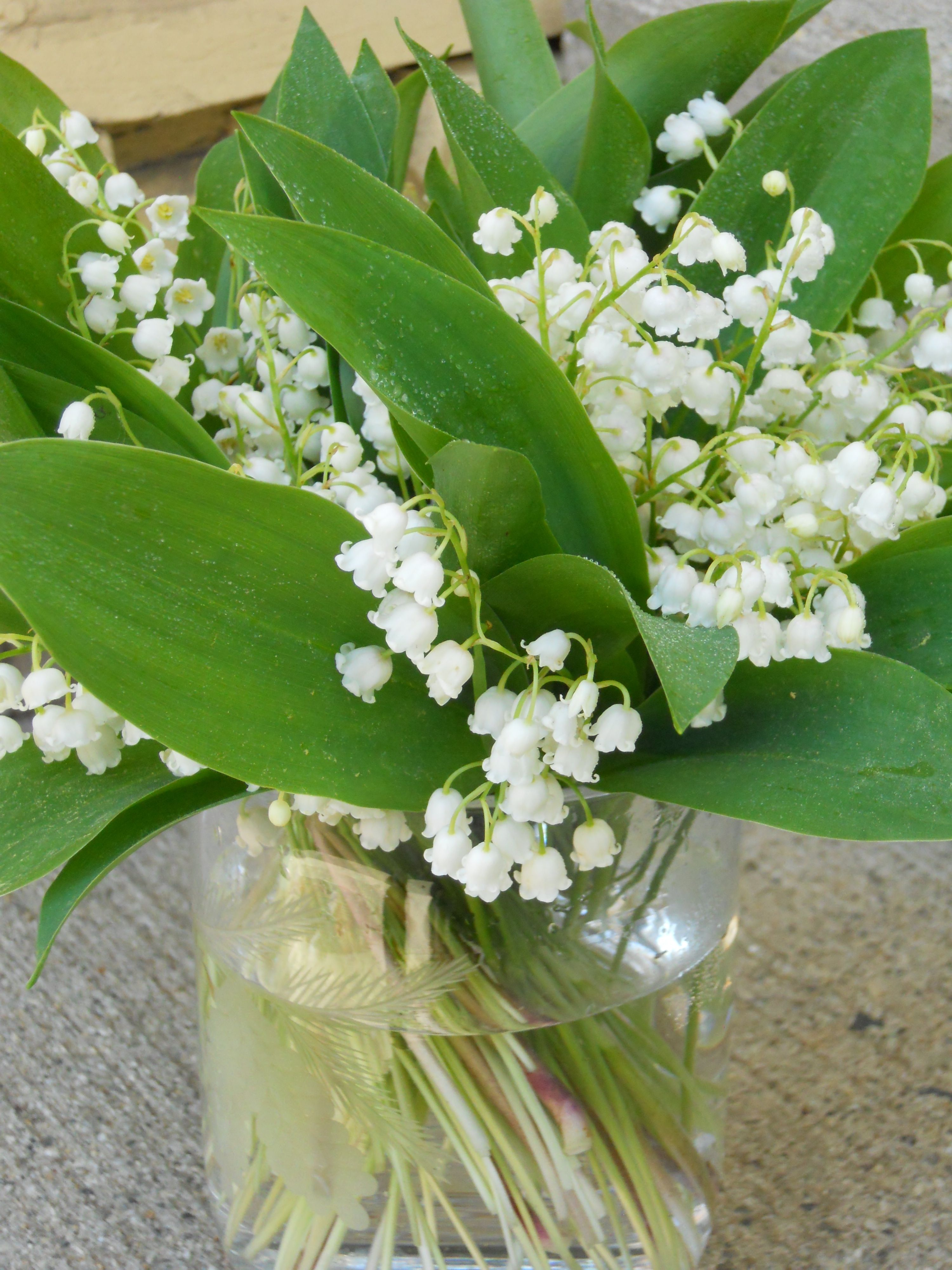 Lily of the valley flowers lily of the valley chic gifts
