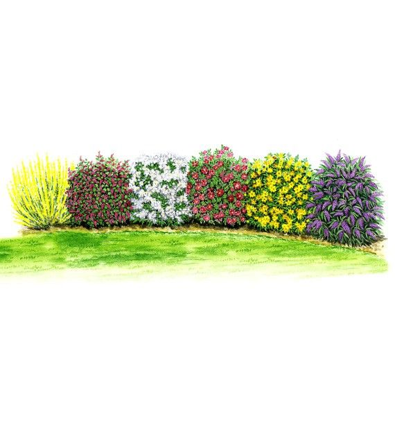 kit haie fleurie parfumee jacques briant plante en ligne. Black Bedroom Furniture Sets. Home Design Ideas