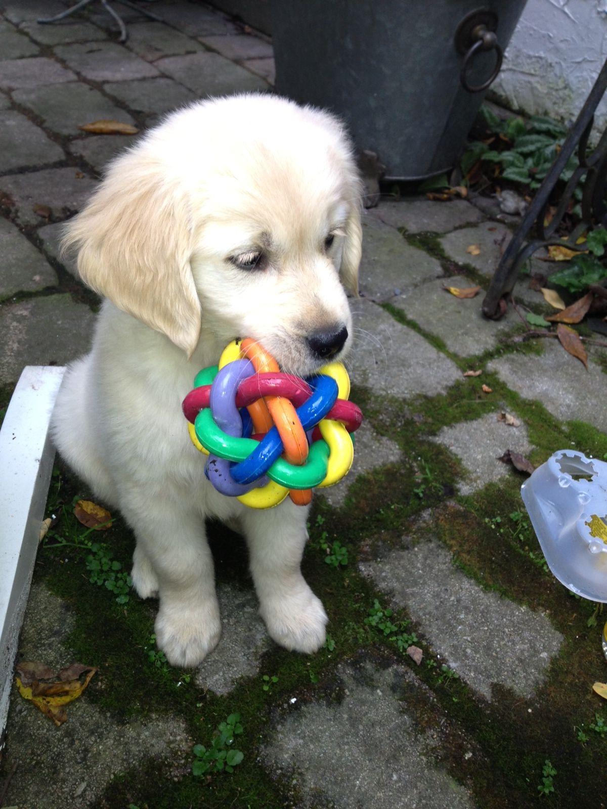 Puppy the cutest pinterest dog