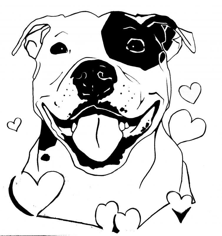 Image Result For Staffy Drawings