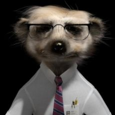 Sergei Aleksandr Couldn T Do Without Him Meerkat Animals Old Photos