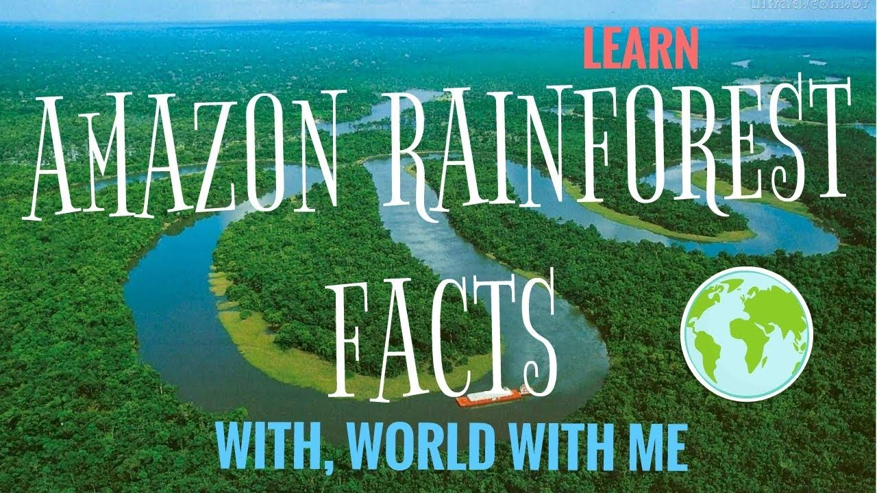 Amazon Rain Forest The New Mystery Is Revelation