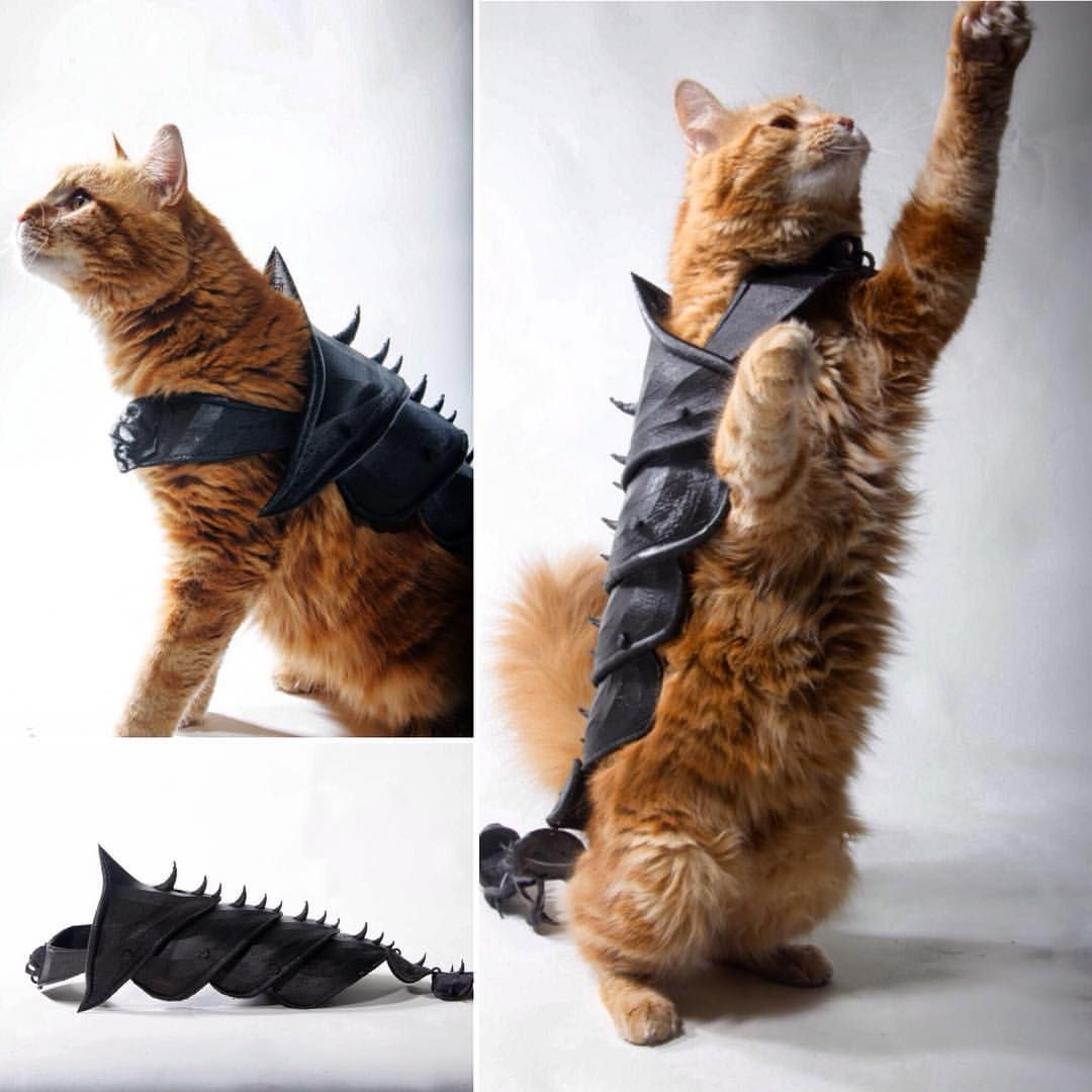 Happy NationalCatDay! Epic 3D Printed Cat Armour by