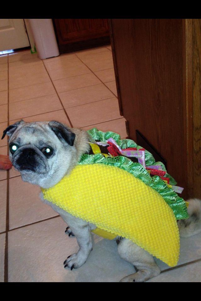 Skittles My Pug Is An Taco Skittles Pugs Crochet Hats
