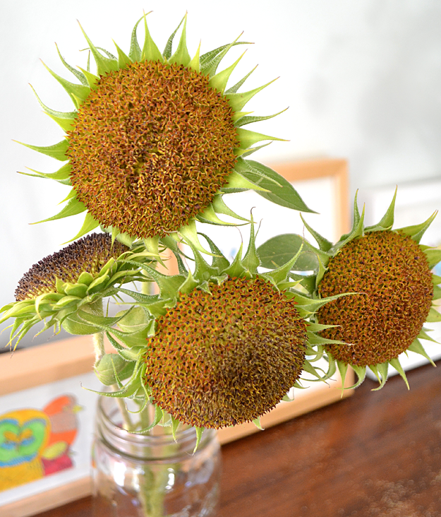 pull the petals off to save sunflowers for just a bit ...