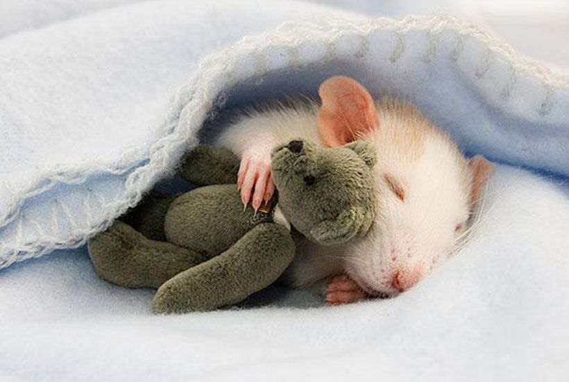 Sleeping Animals . © Boredpanda
