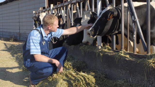 Veterinarian Visit Veterinarian Animal Doctor Farm Life