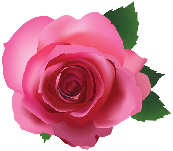 Pink Rose Transparent PNG Image