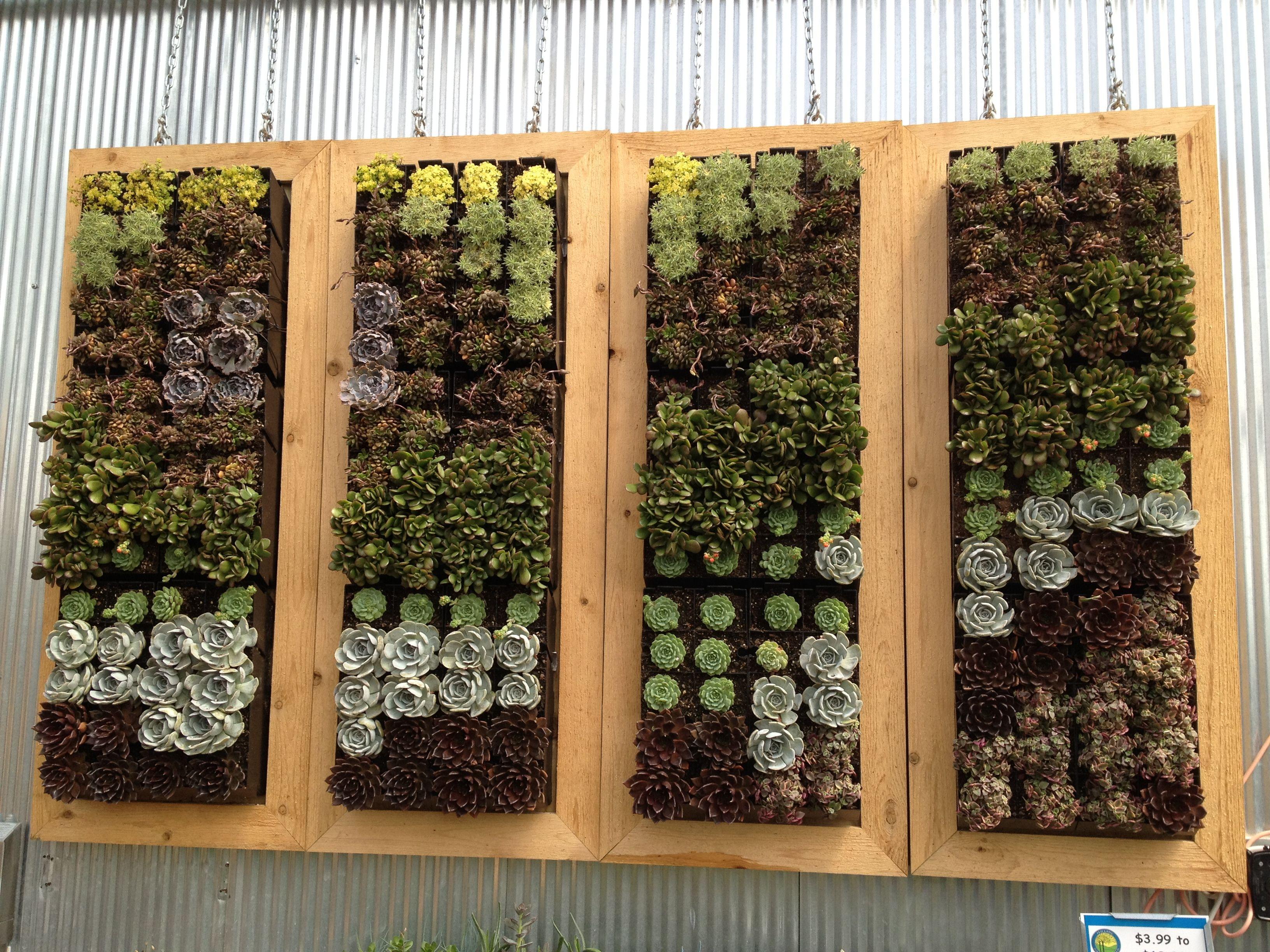 Succulent Wall | Vertical Gardening | Pinterest | Succulent wall ...