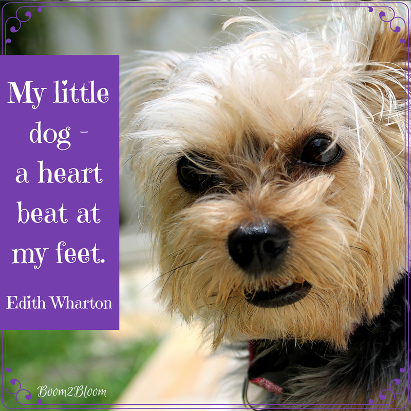 50 Quotes About Dogs Ebook