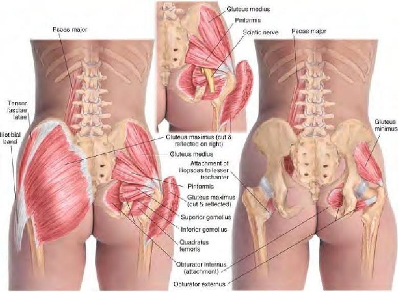 Muskeln im Hintern- Massage | human body | Pinterest | Muskel ...