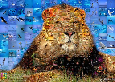 Create Your Own Photo Puzzle Collage Puzzleyou Com Ca 11
