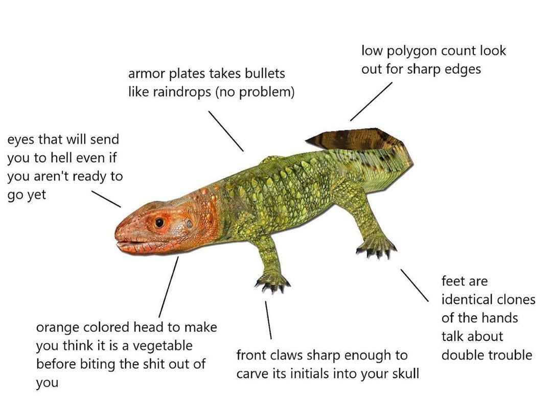 Exhibit 49 Northern Caiman Lizard Meme Memes Animal Diagrams Wildlife Lmao Funny Diagram Dank Caiman Lizard Lizard Meme Caiman