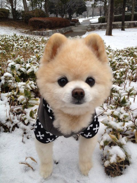 Look Soo Cutee With An Evil Personality Lol Adorable Pinterest