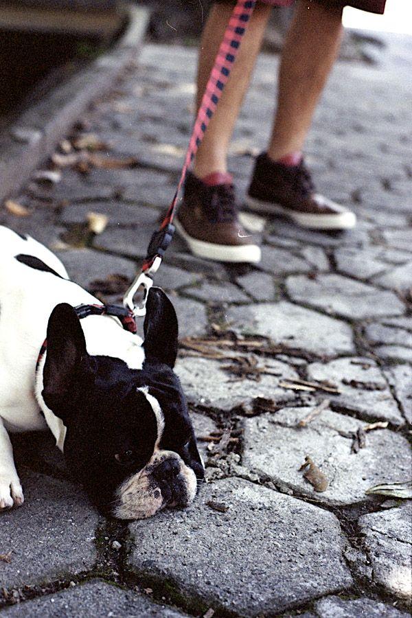 Zee.Dog | Blog