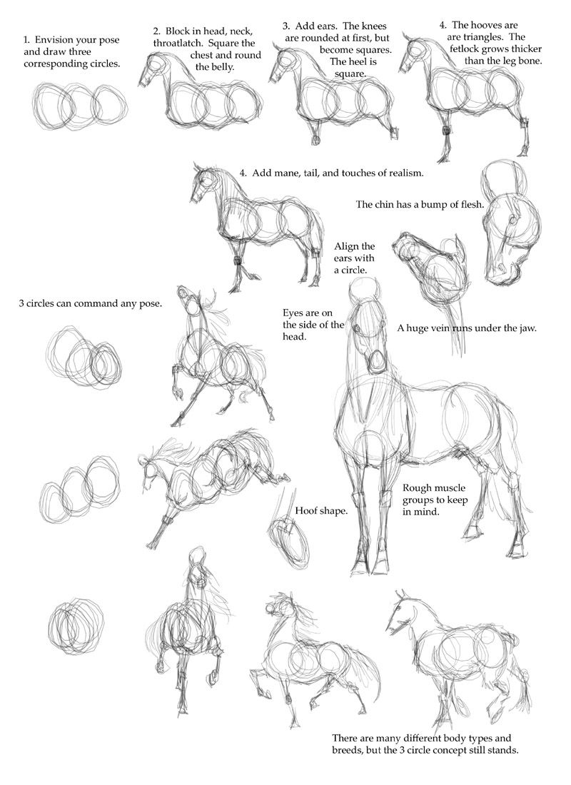 horse anatomy - how to draw a horse step by step - I have no hope of ...