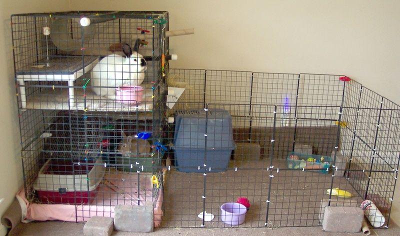 Homemade Rabbit Cages Indoor Rabbit Indoor Rabbit Cage Rabbit