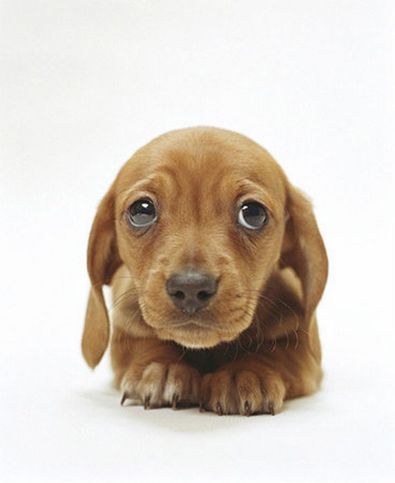 Who Can Resist Sad Puppy Dog Eyes Puppy Love Pinterest