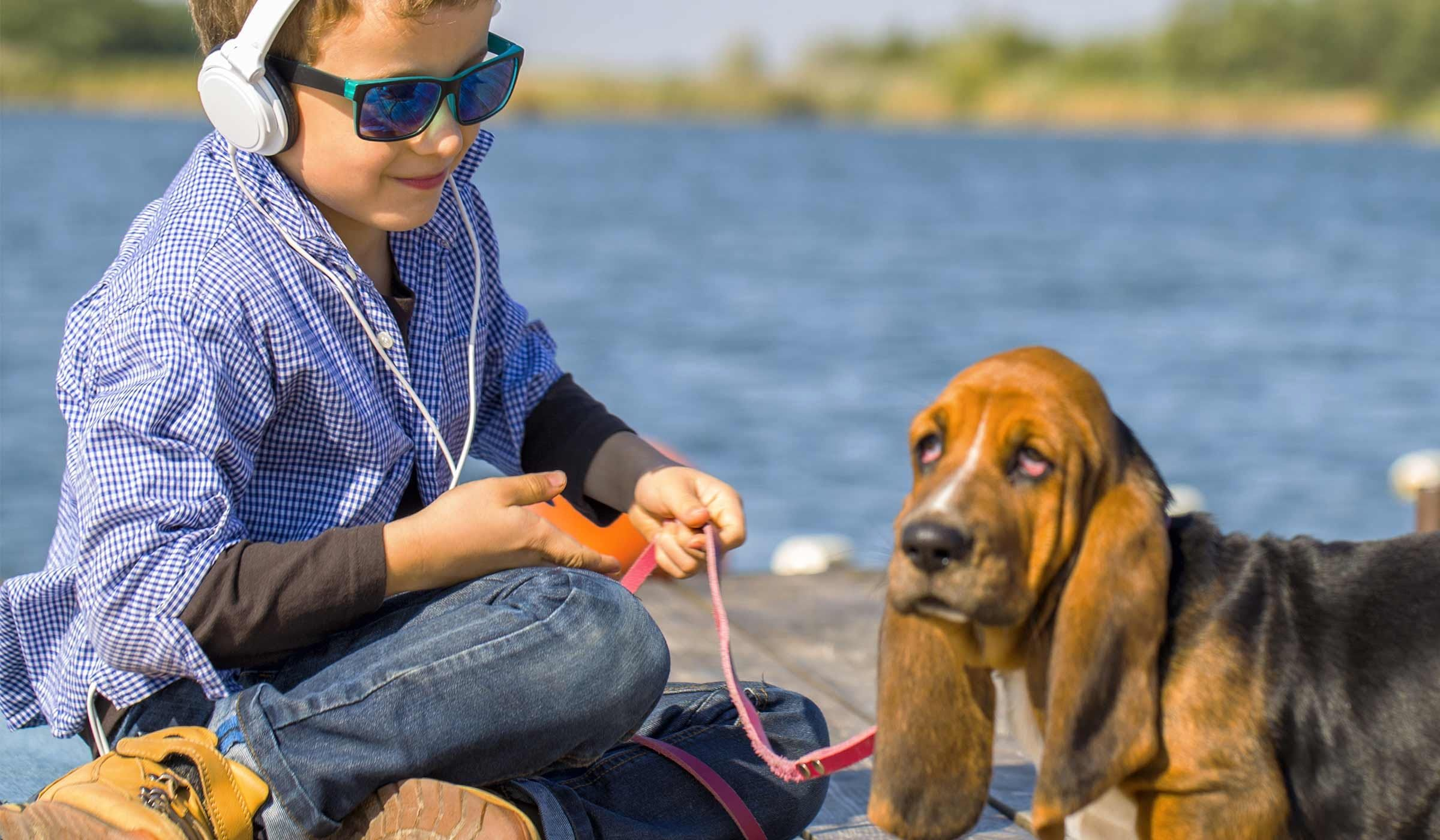 How To Train Your Basset Hound Dog To Listen Dog Training