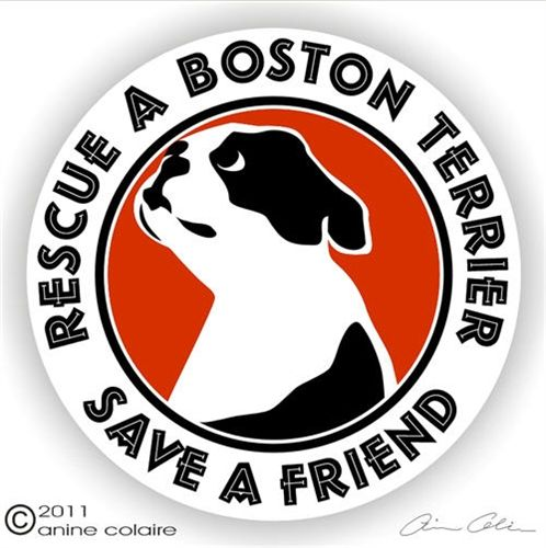 Rescue Boston Terrier Decals Stickers NickerStickers Boston - Custom vinyl decals boston