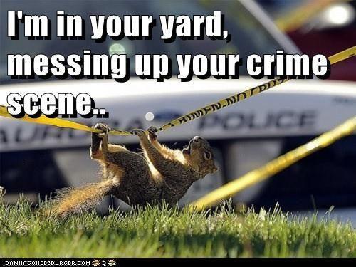 http://www.interestingandfun.com/wp-content/uploads/2013/03/Funny-squirrel.jpg