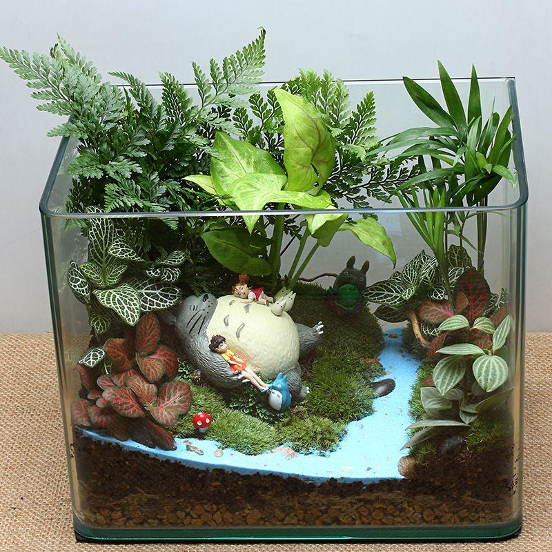 Mini Totoro Garden Ferns Moss House Plants Succulent