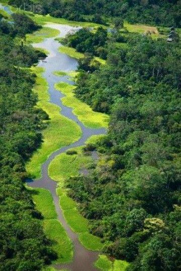Imagenes De La Selva Amazonica Colombiana Imagenes De La Selva Paisajes De La Selva Hermosos Paisajes