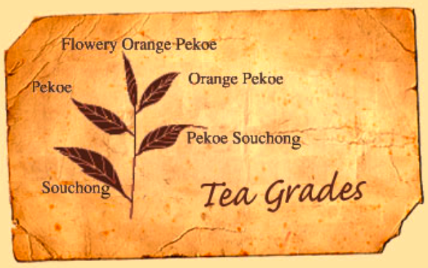 Tea Leaf Grades Starting With Flowery Orange Pekoe Orange Not From The Color Or Flavor But From The Dutch Royal House O Orange Pekoe Tea History Tea Leaves