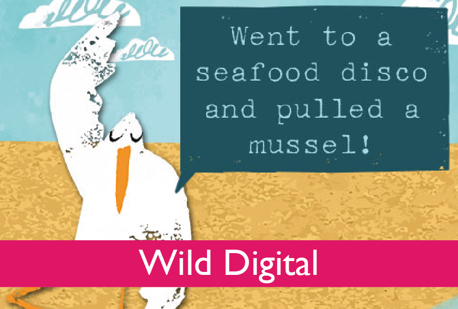 Find out more about our Digital offering at www.wildcard.co.uk