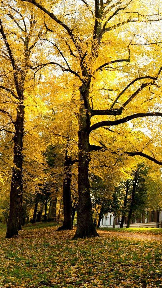 Yellow Trees Sunny Autumn Netherlands Landscape IPhone 5