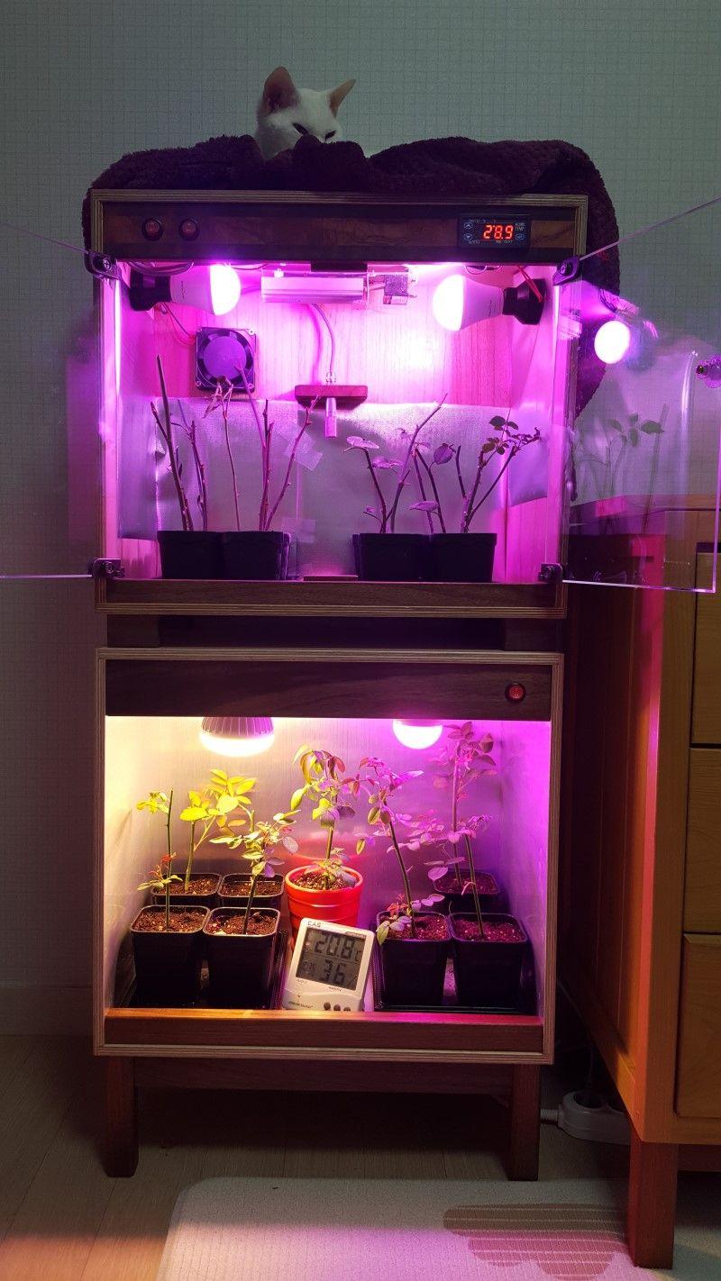 삽목 상자를 활용한 장미 번식 방법 장미, 정원, 원예