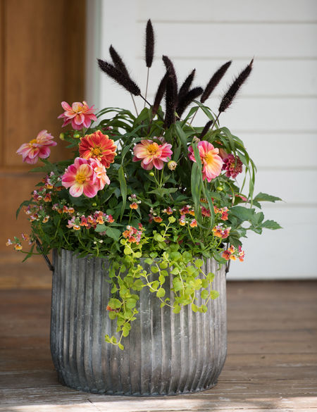 Photo of Galvanized Ribbed Barrel Planters – Pots for Plants | Gardeners.com